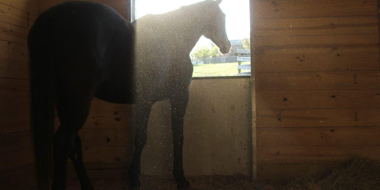 Poll Recap: Air Quality in Horse Barns – The Horse