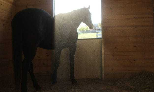 Horse Barn Air Quality: Pathogens Prevalent in Box Stalls