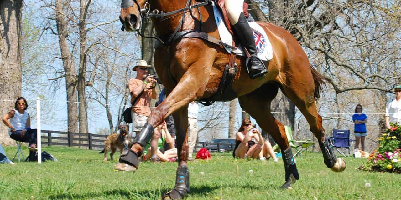 Tendon And Ligament Injuries The Horse