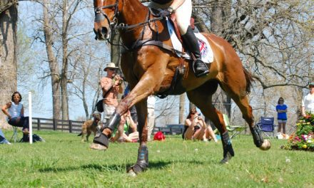 Breathing Easy Key to Equine Performance and Health
