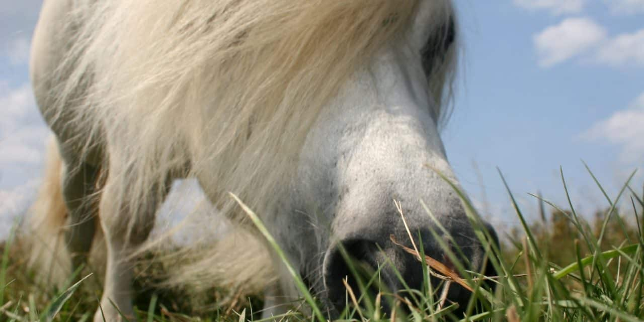 Pony on lots of grass