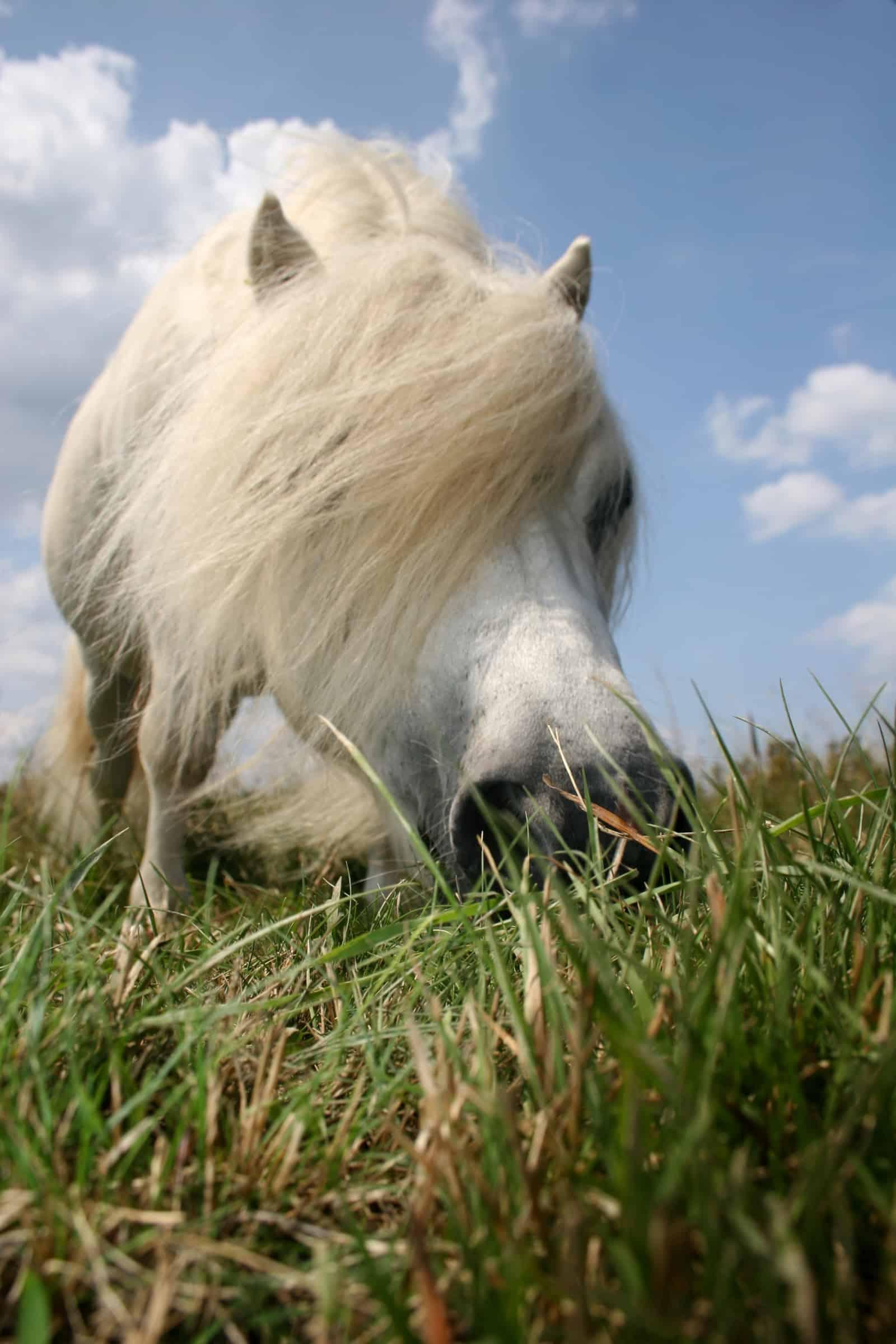 When Do Horses Need Vitamin E?
