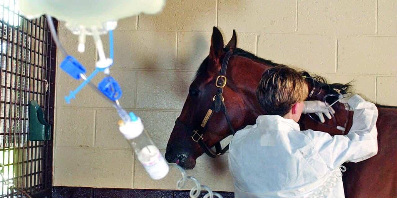 Leukopenia Horse