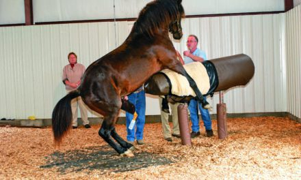 'Cheap 'n' Easy' Method for Evaluating Stallion Sperm Described (AAEP 2012)