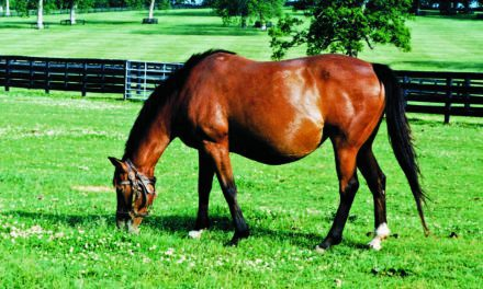 Broodmares' Nutritional Needs During Late Gestation