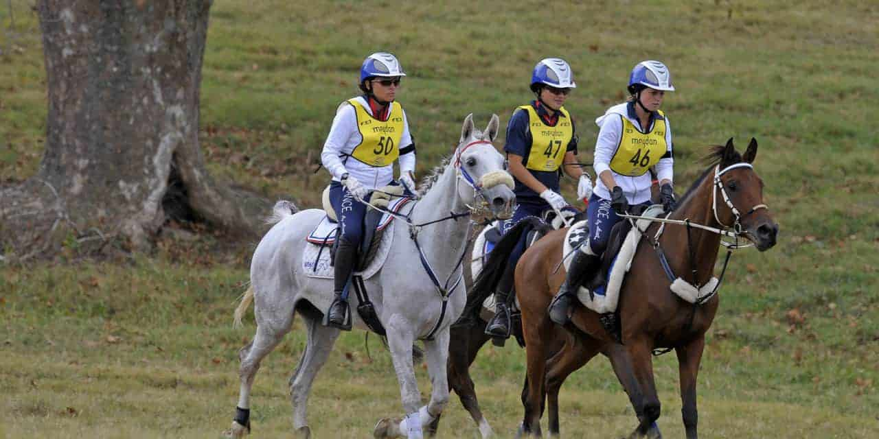 Risk Factors for Elimination During Endurance Rides Examined