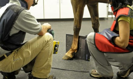 Do Radiographic Abnormalities Impact Equine Performance?