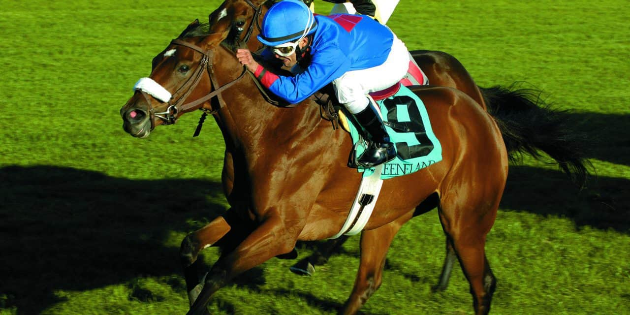 Results of Standing Fracture Repair in Racehorses Examined – The Horse