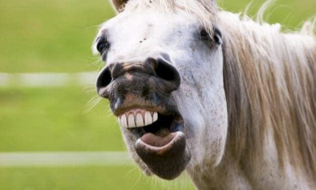 Older Horse Dental Problems