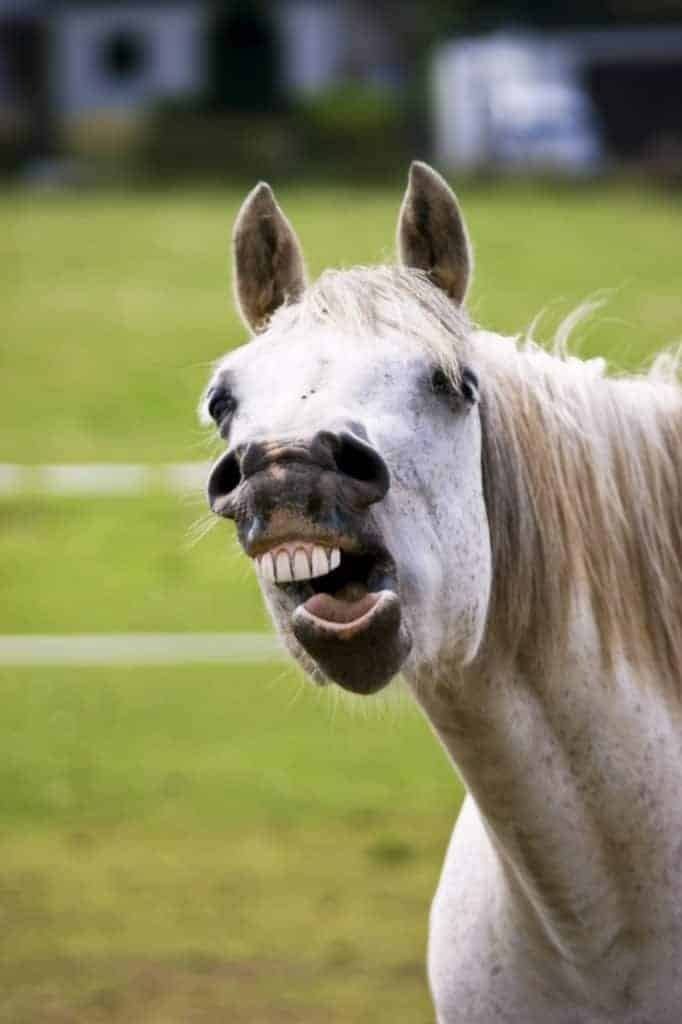 Equine Wolf Teeth – The Horse