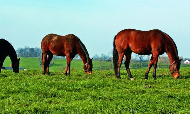 Broodmare Nutrition: Preparing for Fall and Winter