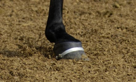Lecture Discusses NEXT Generation in Equine Tissue Healing