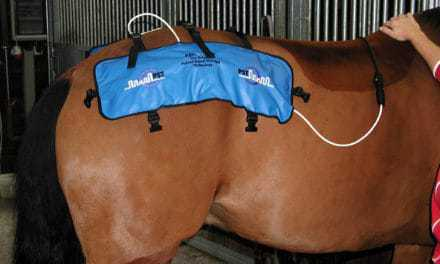 Equine Physical Therapy and Electrical Stimulators