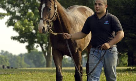 Behavioral Differences Between Colts and Fillies Examined