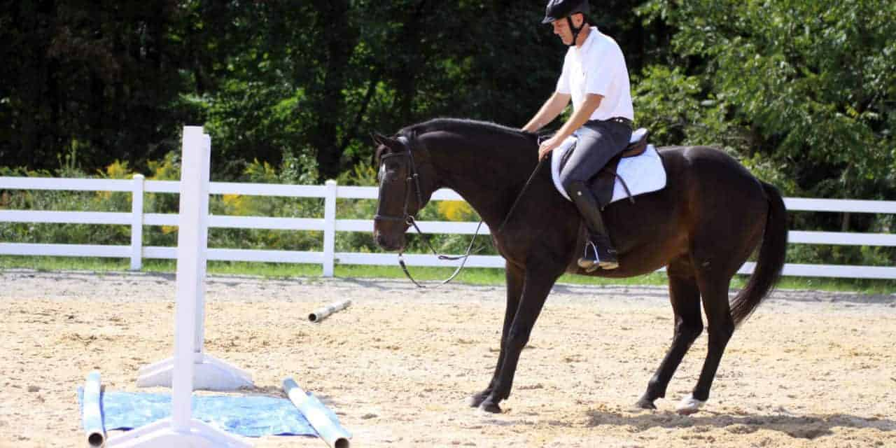 Investigative Behavior S Influence On Horse Jumping The Horse