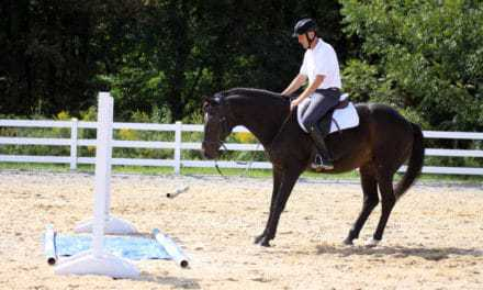 Investigative Behavior's Influence on Horse Jumping