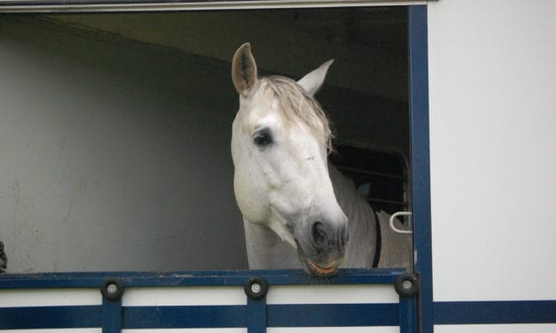 Sticky Scenarios You Might Encounter When Shipping and Showing Horses