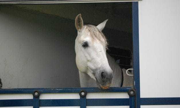 Transporting Older Equine Athletes