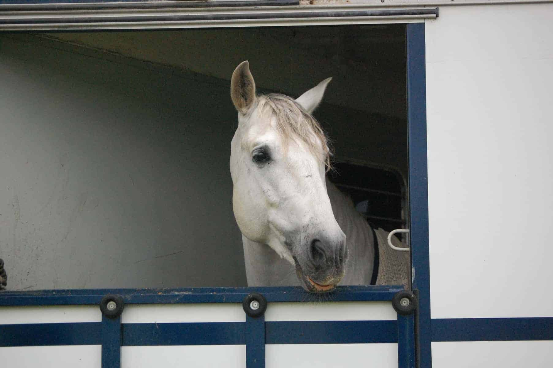 Study: Transportation Related to Equine Gastric Ulcers