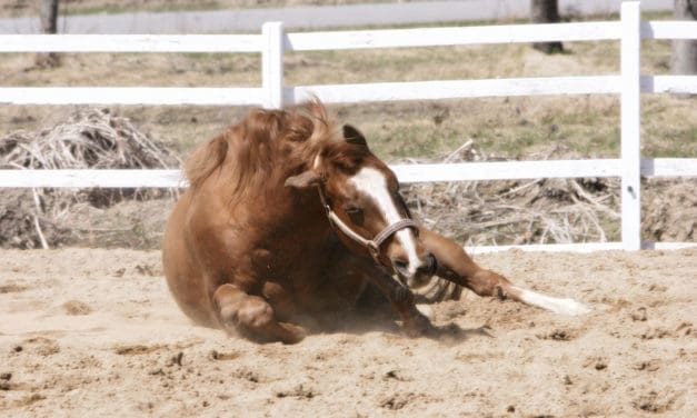 How to Prevent Sand Colic in Horses