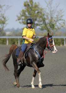 Summer Riding: When the Rider is Hot, the Horse is Hotter