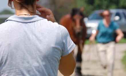 2011's Top Equine Surgery/Lameness Studies