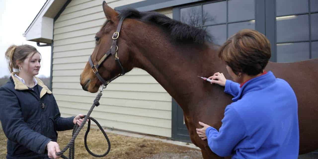 Image result for horse vet
