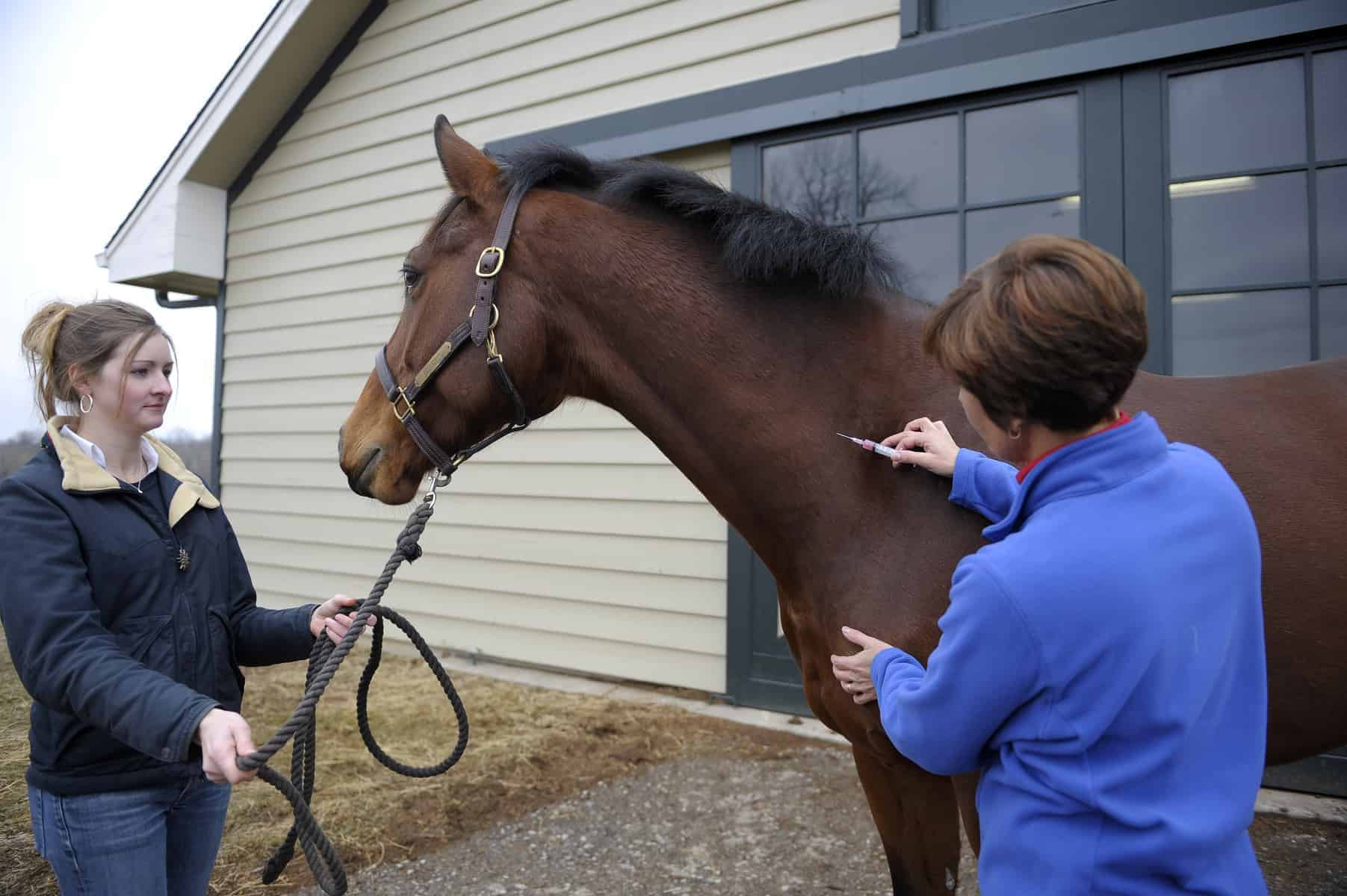 A Day In The Life Of A Mobile Equine Vet The Horse