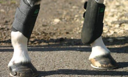 How Hoof Anatomy Affects Biomechanics in Sport Horses