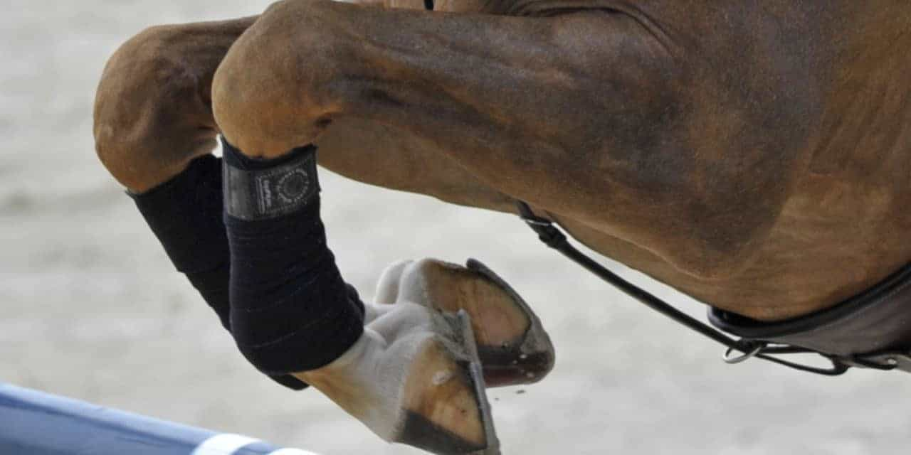 The Latest Insights into Managing Joint Disease in Horses