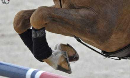 Promoting Lifelong Equine Joint Health