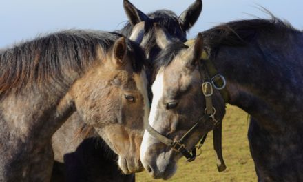 Is Your Horse at Risk for Infectious Disease?