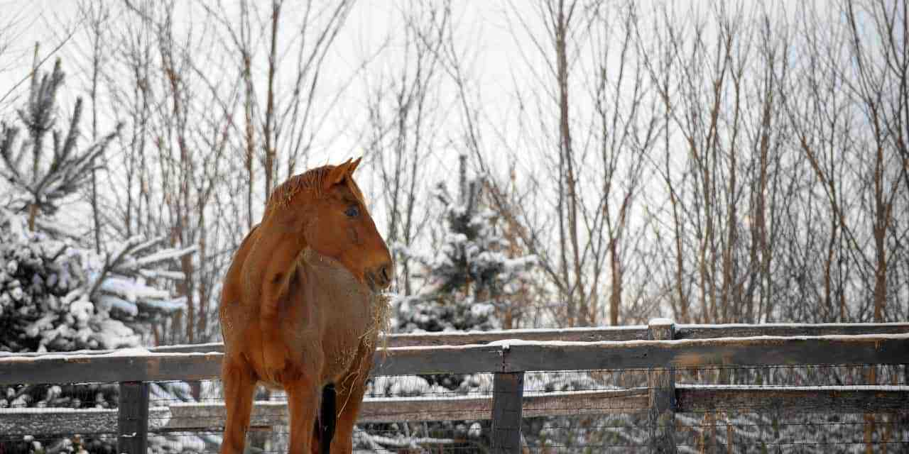 Feeds and Supplements for Older Horses – The Horse