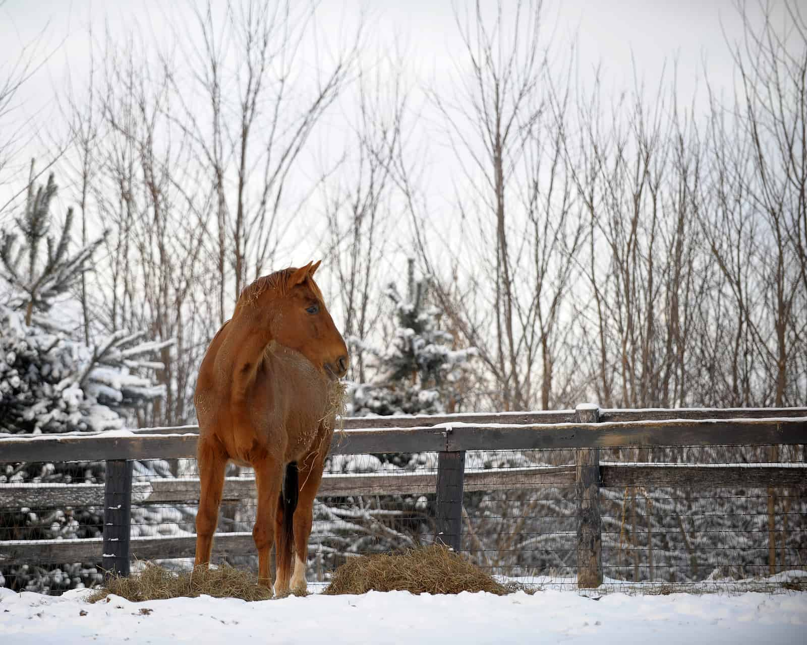 Keeping an Older Horse in Good Weight During Winter