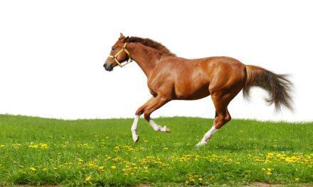 Equine Metabolism