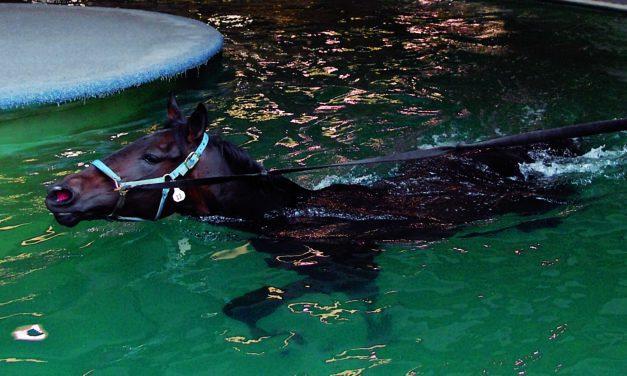 Swimming Can Improve Horse Glucose, Insulin Levels