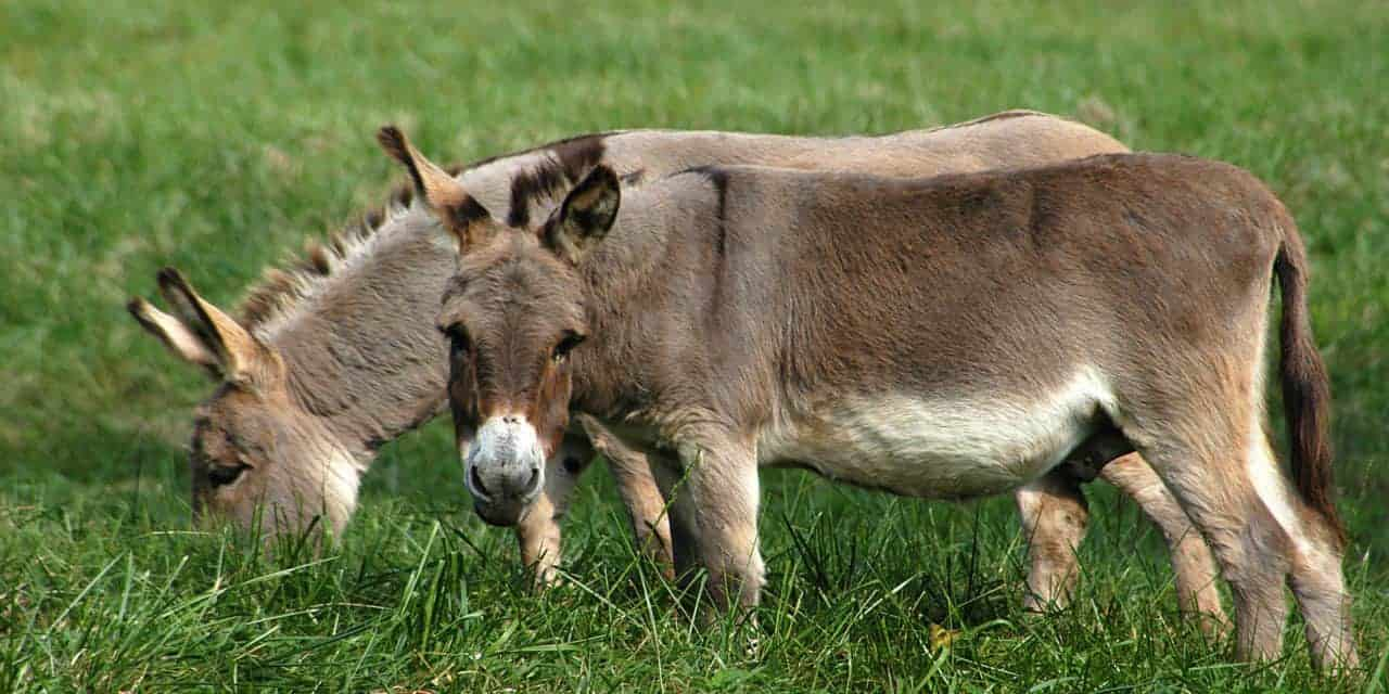 Caring for Long Ears – The Horse