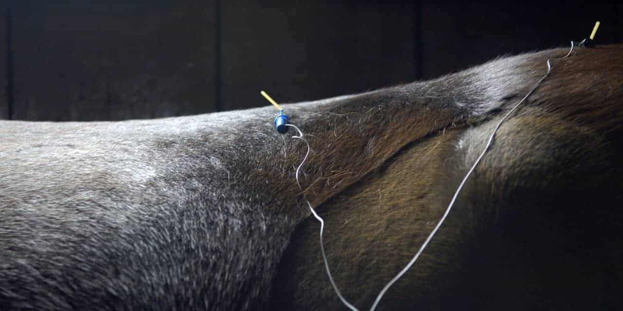 Acupuncture and Managing Pain in Horses (AAEP 2011)