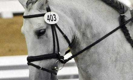 Equine Head Flexion and Airway Inflammation (AAEP 2011)