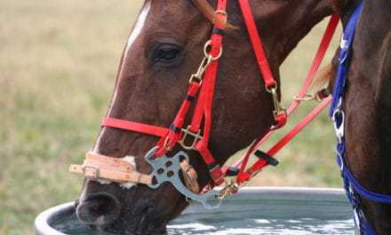 Avoiding Dehydration in Sport Horses During Summer