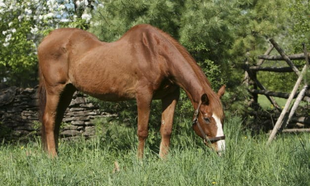 Old Horses: Diseases and Conditions