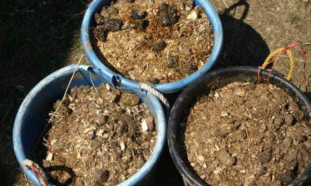 Does Horse Manure Make Safe Compost?