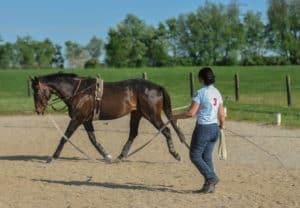 cavalo longeing