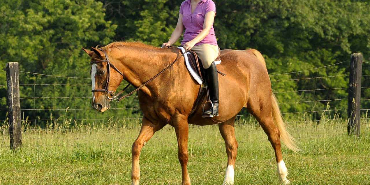 Exercise Increases Insulin Sensitivity in Horses