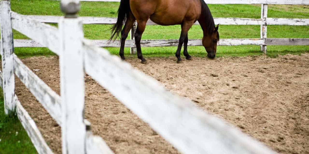 Poll Recap: Readers Weigh In on Equine Diets