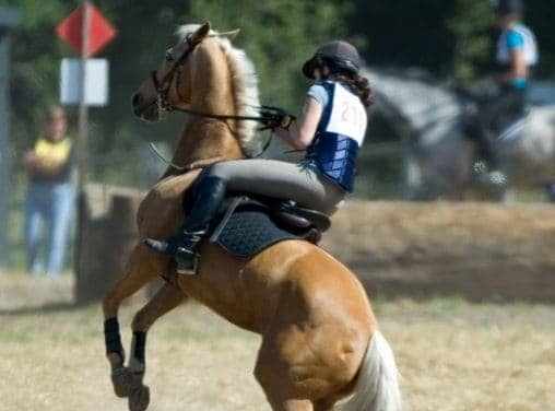 Taking the Edge Off: Calming Supplements for Horses
