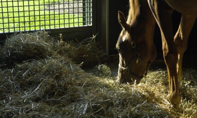 Inhaling Fungi Increases Horses' Risk of Inflammatory Airway Disease