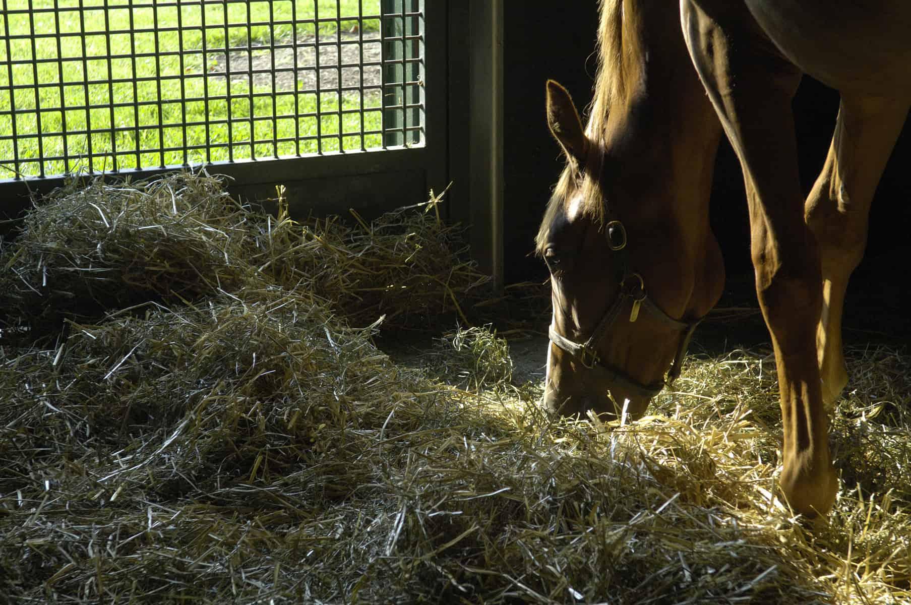 Inhaling Fungi Increases Horses' Risk of Inflammatory Airway Disease – The Horse