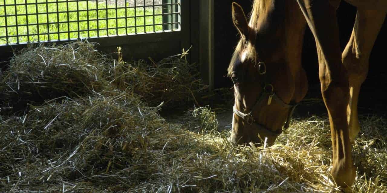 A Forage-Only Diet for Young Horses in Training Evaluated