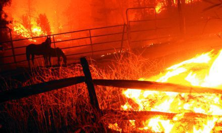 Horse Owners Urged to Prepare for Active Wildfire Season